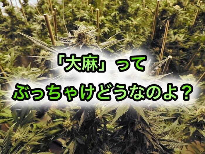 大麻吸いたい